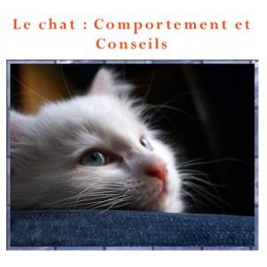 Le chat : comportement et conseils