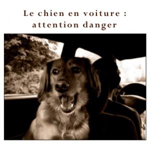 Le chien en voiture